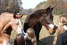The horses were friendly and welcomed the attention.